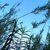 Sedona grasses