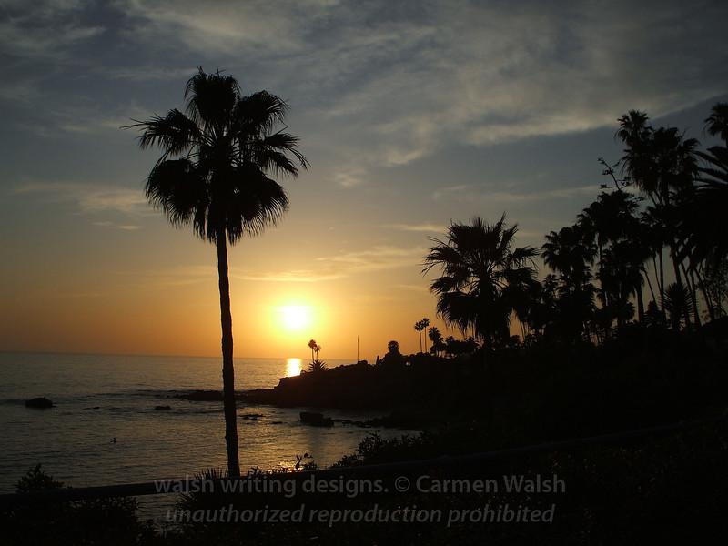 Laguna Beach sunset palm