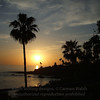 Laguna Beach sunset palm