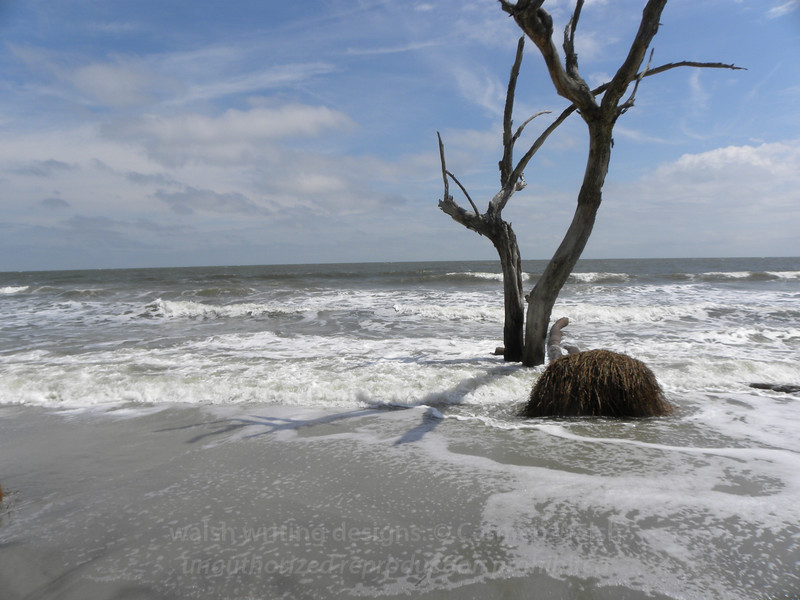 Beached tree 5