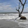 Beached tree 5
