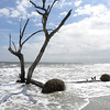Beached tree 1