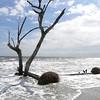 Beached tree 1