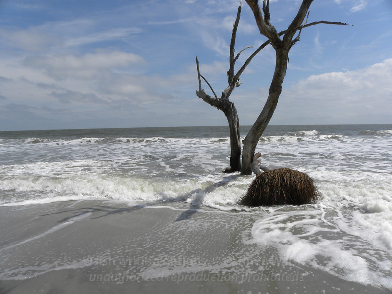 Beached tree 3