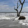 Beached tree 3