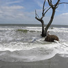 Beached tree 4