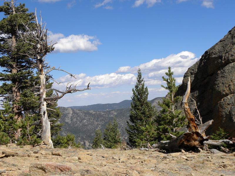 Mountain tree stump