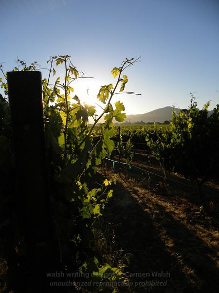 Vines aglow 1