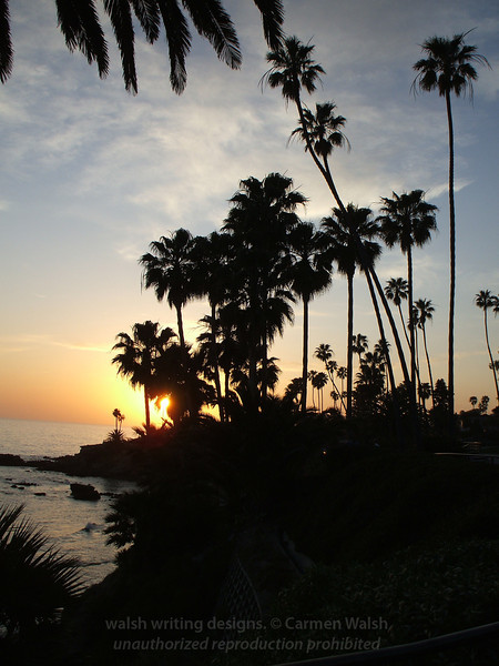 Palm trees at Laguna sunset