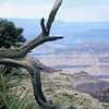 Grand Canyon branch
