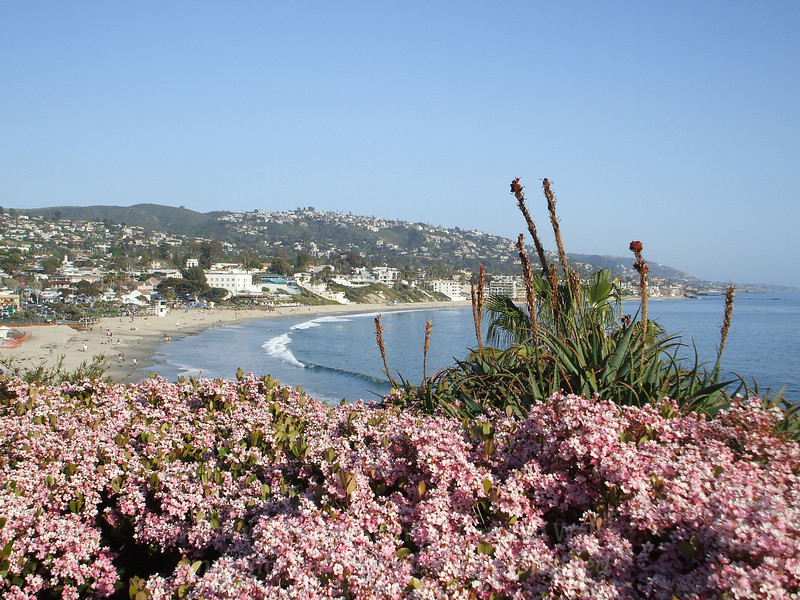 Laguna Beach flowers