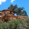 Cliff-top tree