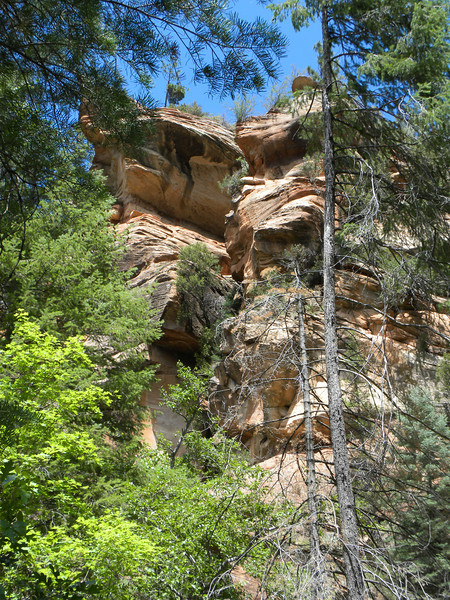 West Fork trees and rocks