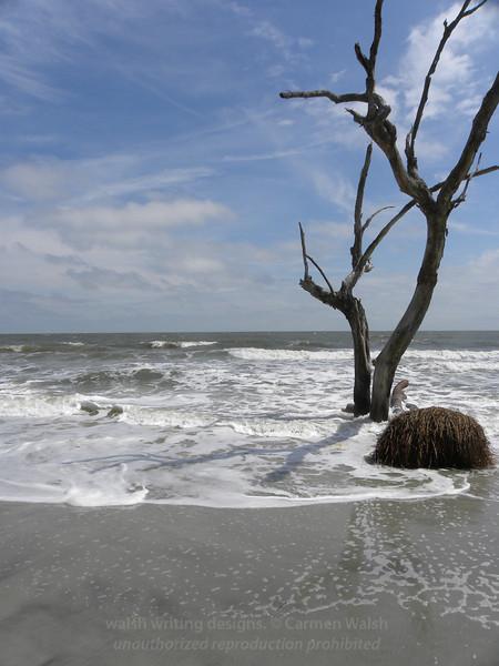 Beached tree 6