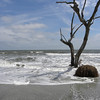 Beached tree 6