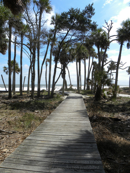 Forest walkway to the ocean
