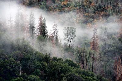 The Fog Reveals