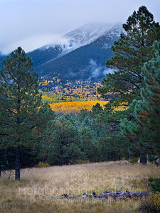Snowstorms & Misty Autumn Mornings, San Francisco Peaks, Arizona
