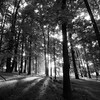 Shadow Trees - Valley Forge National Historic Park<br /> <br /> © Scott Frederick Photography : All Rights Reserved