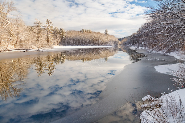 Squam River Gold Reflection