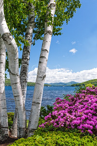 Spring Blooms Sunshine Lake Winnipesaukee
