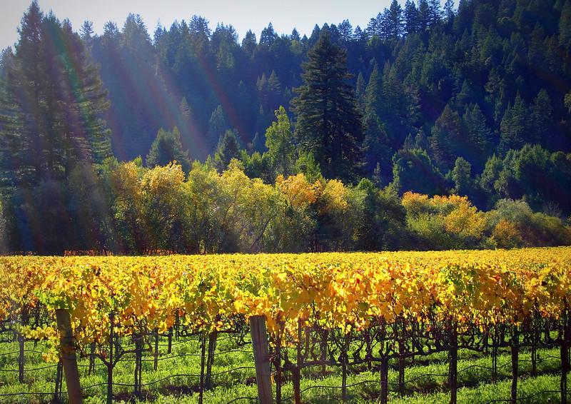 Autumn Harvest Sunshine