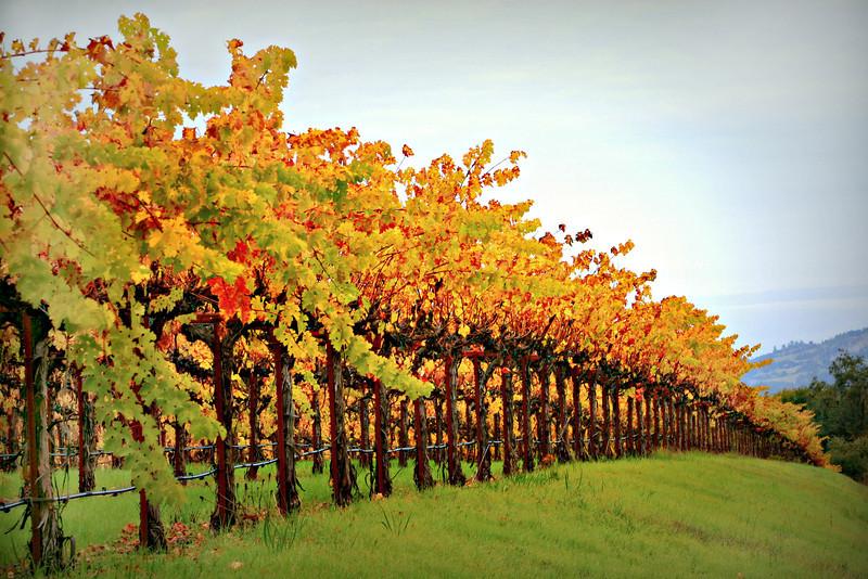 Dutcher Creek Vineyard