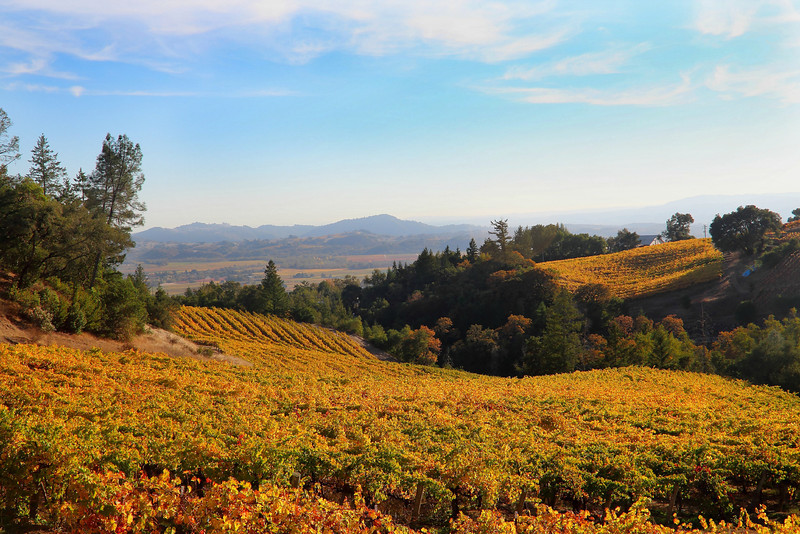 Northern Autumn Vineyard