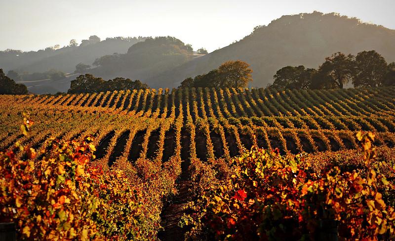 Drycreek Autumn Vineyard