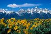 #35 Teton Spring, Grand Teton NP, WY