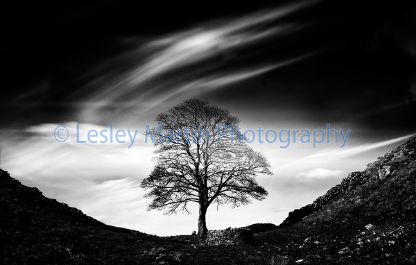 The Sycamore Gap