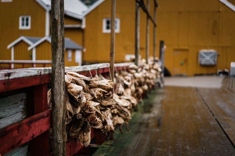 Dried fish in Nusfjord