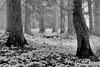 Cedar forest on Moscow Mountain