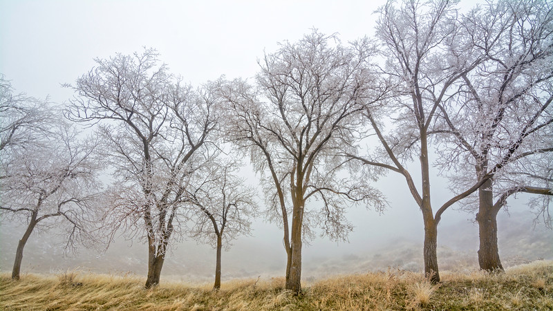 Cold winter fog with a row of trees