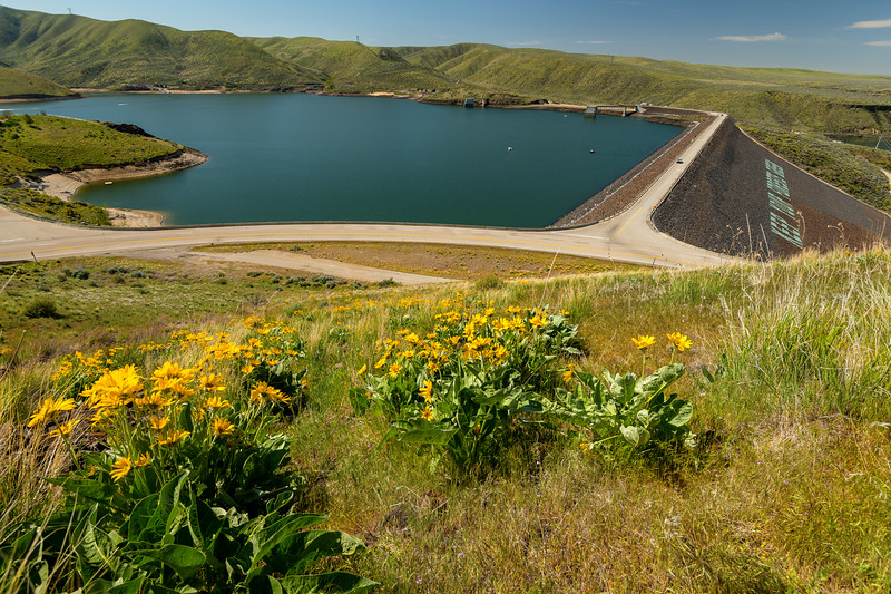 arrowleaf balsamroot in full spring bloom over an Idaho reservoir and earthen dam