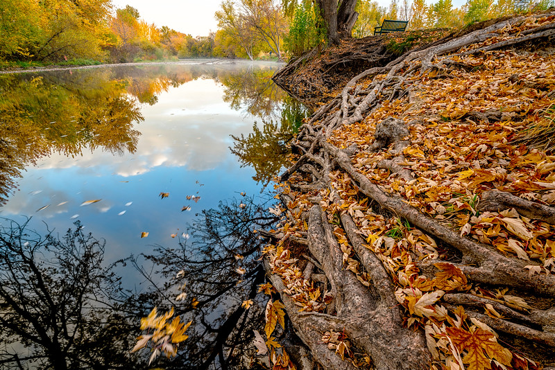 Boise River in the fall with unique tree roots
