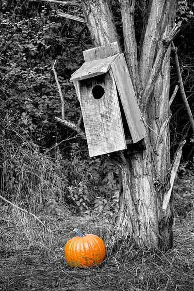 Old wood birdhouse with a Pumpkin in the Forest
