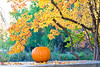 Pumpkin on a Bench in the Fall