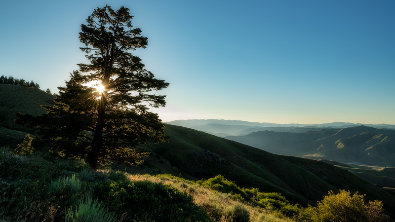 Clear sun star shines through a line pin tree above a canyon in Idaho
