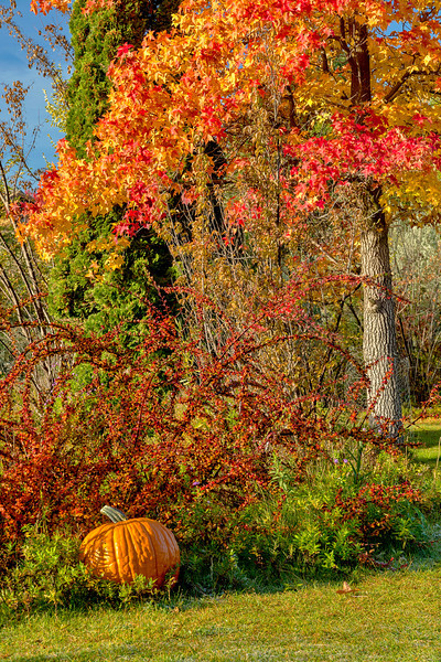 Autumn Tree and Pumpkin