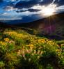 Sunset Spring Boise Foothills