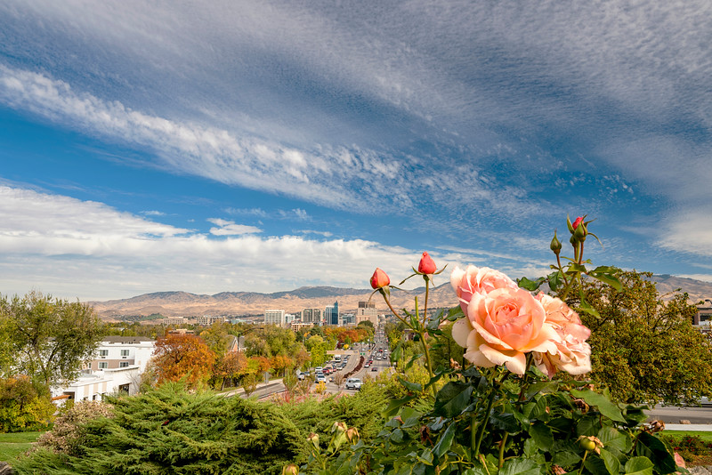 Fall in the City of trees Boise Idaho with a rose