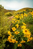Chuck Knowles - Footpath leads in to the foothills over Boise in spring