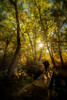 Chuck Knowles - Taking a walk in a autumn forest crossing a bridge