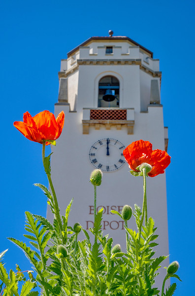 Boise Train Depot with Poppies