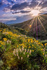 Natural spring flowers and dramatic clouds