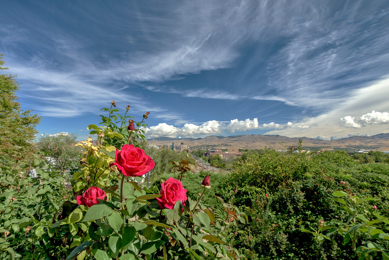 Roses and the City of Boise