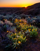 Sunset over the foothills above Boise Idaho with wildflowers