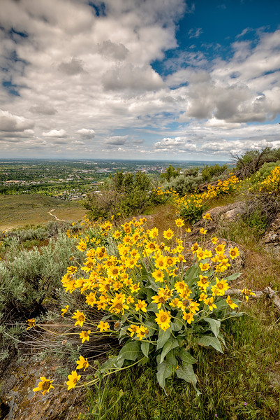 Beautiful view of Boise with Spring Flowers