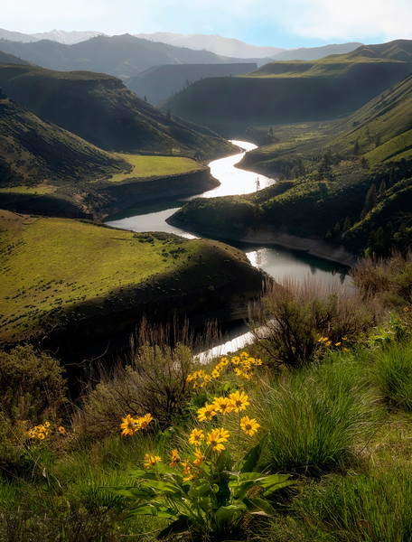 Winding canyon of the South Fork of the Boise river with Arrowleaf balsamroot in full bloom